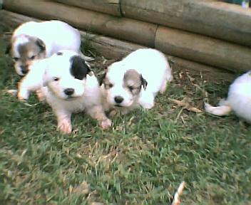 pups2001.jpg