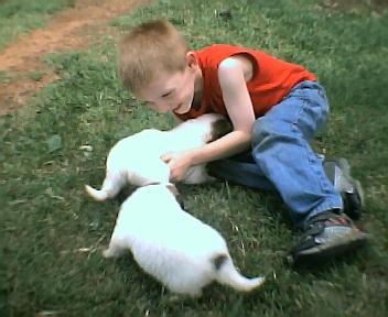 pups2004.jpg